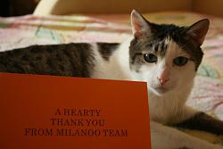 Покупки в магазине milanoo.com-img_8212-jpg