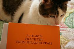 Покупки в магазине milanoo.com-img_8210-jpg