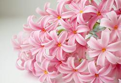 Цветы из холодного фарфора-11-2-jpg